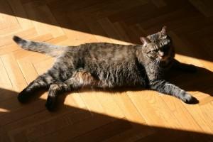 Belly bronze