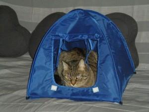 Belly dans sa tente