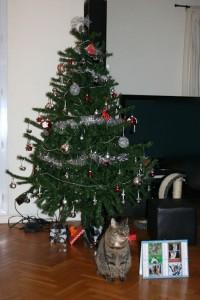 Belly attend Noël